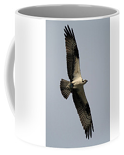 Coffee Mug featuring the photograph Osprey With Fish by Rick Veldman