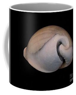 Painted Shell No. 10 Coffee Mug