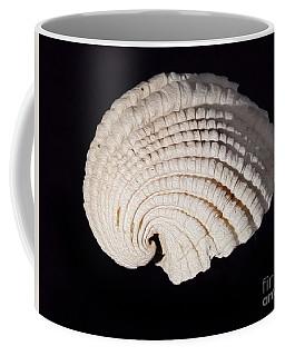 Painted Shell No. 3 Coffee Mug
