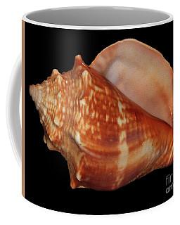 Painted Shell No. 9 Coffee Mug