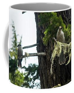 Pair Of Gray Jays Coffee Mug