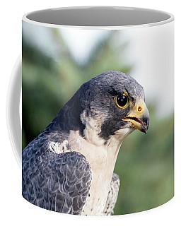 Coffee Mug featuring the photograph Peregrine Falcon by Rick Veldman