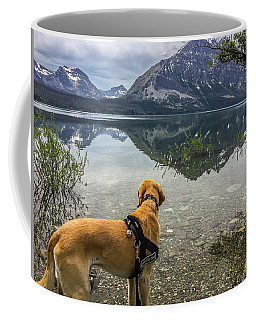 Coffee Mug featuring the photograph Photo Dog Jackson At Glacier by Matthew Irvin