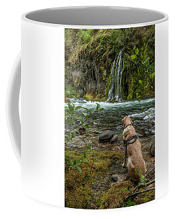 Coffee Mug featuring the photograph Photo Dog Jackson Contemplating His Next Photograph  by Matthew Irvin