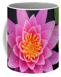 Pink Petals In The Rain  Coffee Mug