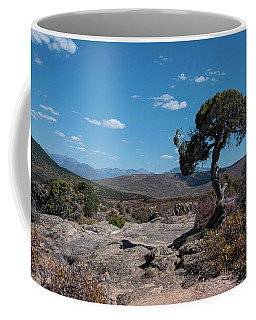 Pinyon Pine With North Rim In Background Black Canyon Of The Gunnison Coffee Mug