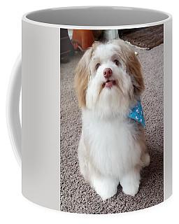 Poco The Havanese Puppy Coffee Mug