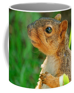Pondering Squirrel Coffee Mug