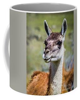 Portrait Of A Guanaco, Patagonia Coffee Mug