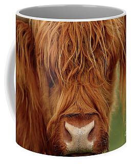 Coffee Mug featuring the photograph Portrait Of A Highland Cow by Maria Gaellman