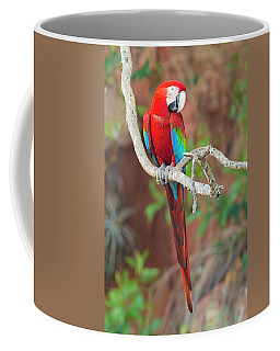 Portrait Of Red-and-green Macaw, Porto Coffee Mug