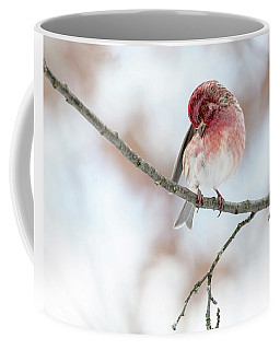 Purple Finch Preening Coffee Mug