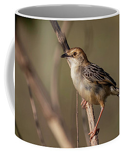 Rattling Cisticola Coffee Mug