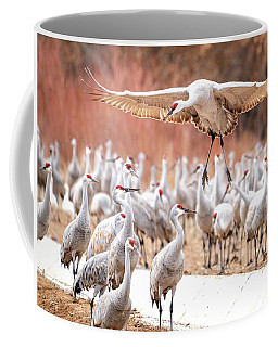 Ready Or Not, Here I Come -- Sandhill Cranes Coffee Mug