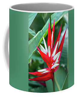 Red And White Birds Of Paradise Coffee Mug