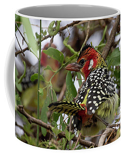 Red-and-yellow Barbet Coffee Mug