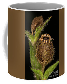 Red Campion Seed Head Coffee Mug