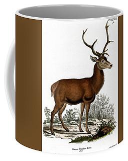Red Deer Circa 19th Century Colored Engraving Coffee Mug
