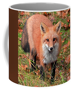 Coffee Mug featuring the photograph Red Fox by Debbie Stahre