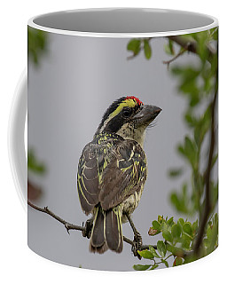 Red-fronted Barbet Coffee Mug