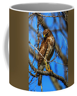Red Shouldered Hawk Coffee Mug