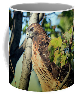 Red-tailed Hawk Looking Down From Tree Coffee Mug
