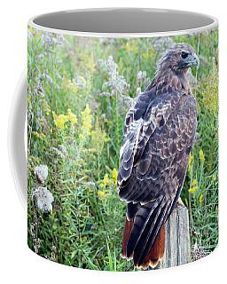 Red-tailed Hawk On Fence Post Coffee Mug