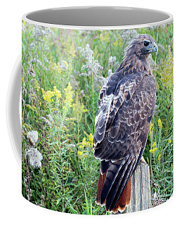 Coffee Mug featuring the photograph Red-tailed Hawk On Fence Post by Rick Veldman