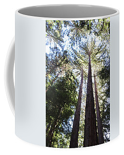 Redwoods, Blue Sky Coffee Mug