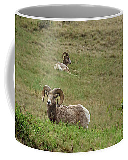 Resting Bighorn Sheep Coffee Mug