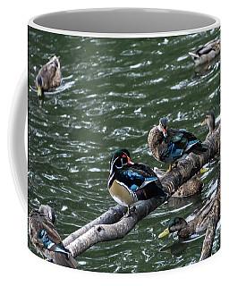 Resting Ducks Coffee Mug