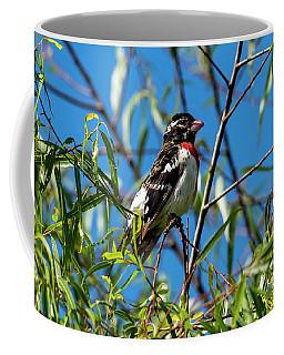 Resting Rose Breasted Grosbeak Coffee Mug