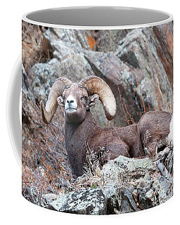 Rocky Mountain Big Horn Ram On Watch Coffee Mug