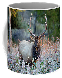 Coffee Mug featuring the photograph Rocky Mountain Wildlife Bull Elk Sunrise by Nathan Bush