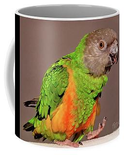 Senegal Parrot Coffee Mug