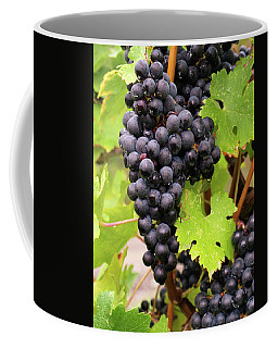 Shalestone - 12 Coffee Mug