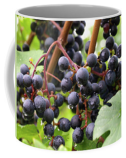 Shalestone - 15 Coffee Mug