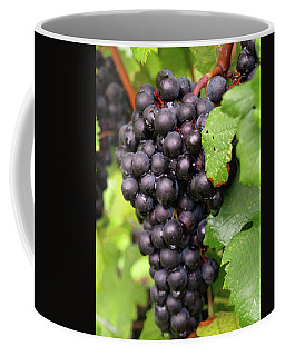 Shalestone - 6 Coffee Mug