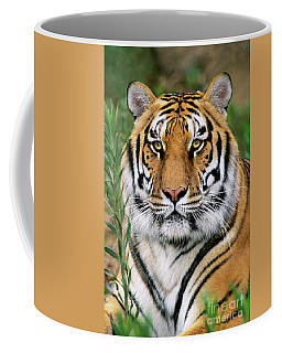 Siberian Tiger Staring Endangered Species Wildlife Rescue Coffee Mug