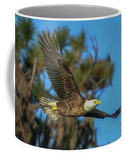 Coffee Mug featuring the photograph Soaring Eagle by Tom Claud