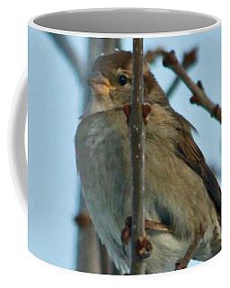 Coffee Mug featuring the photograph Sparrow by Ann E Robson
