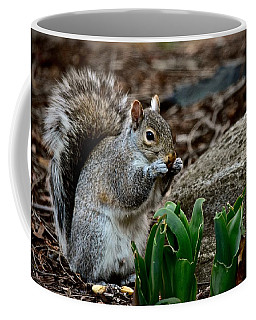 Squirrel And His Dinner Coffee Mug