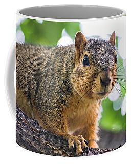 Squirrel Close Up Coffee Mug
