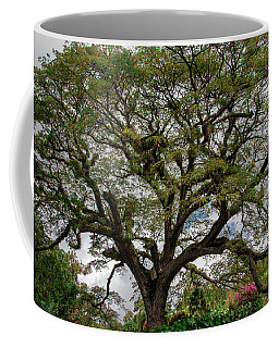 St. Kitts Saman Tree Coffee Mug