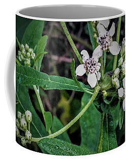 Coffee Mug featuring the photograph Stages Of Life by Vincent Autenrieb