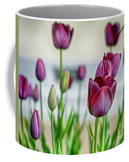Steckborn Tulips Coffee Mug