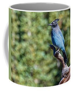 Coffee Mug featuring the photograph Stellers Jay 1 by Rand