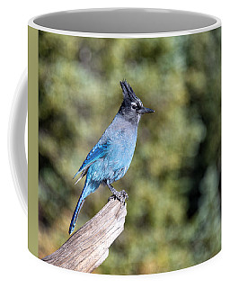Coffee Mug featuring the photograph Stellers Jay by Rand