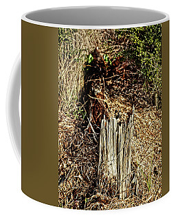 Stump In Swamp Coffee Mug