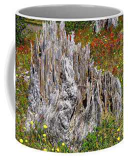 Stumps Of Trees Shattered In The 1980 Eruption Coffee Mug